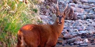 Imagen referencial de especie protegida en Chile